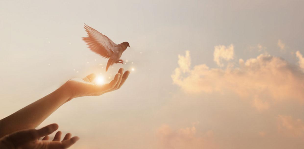 Ein-Vogel-fliegt-aus-einer-Hand-in-die-Luft